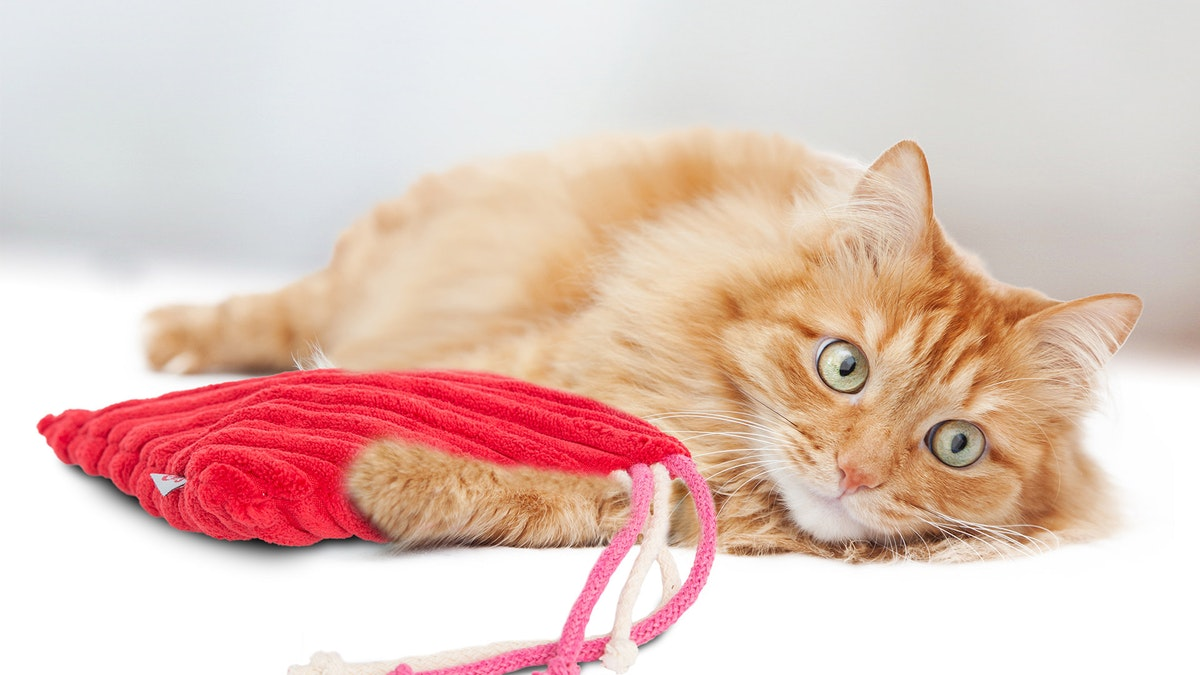 4cats Heimtierbedarf GmbH: Premium-Spielzeuge für Katzen