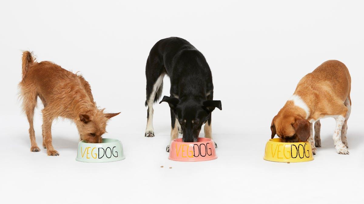 younikat GmbH: VEGDOG - Hundefutter von Tierärzten entwickelt